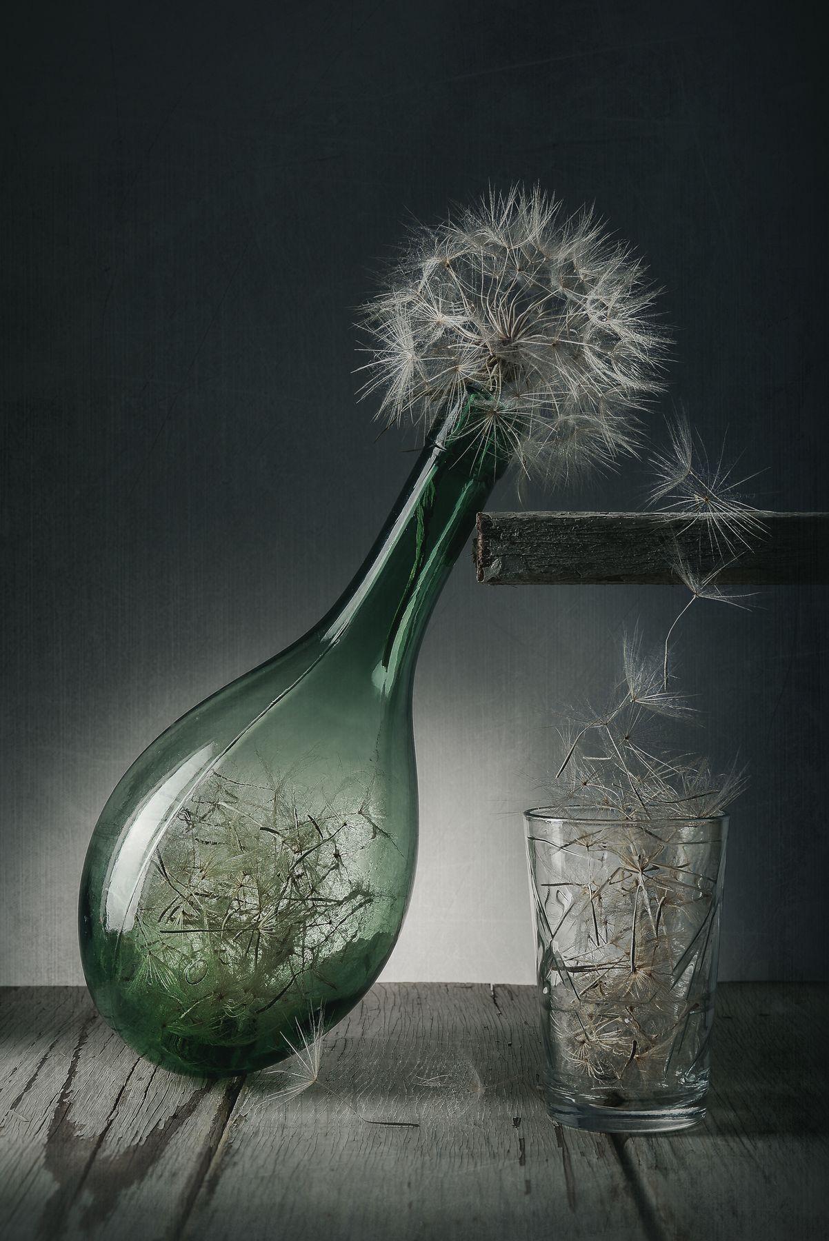 Вино из одуванчиков 2. Натюрморт стекло на просвет одуванчики низкий ключ
