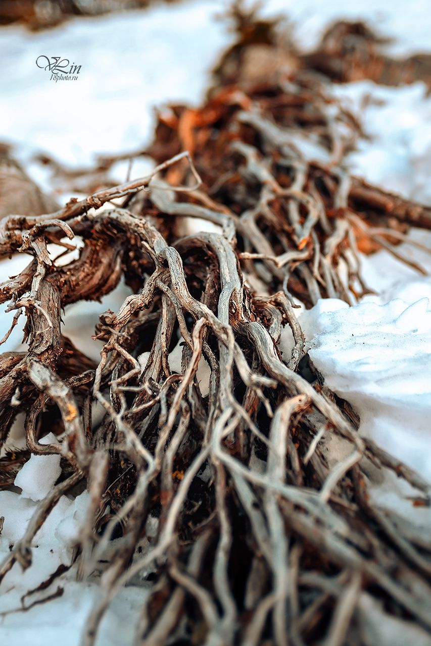 Цепляясь за жизнь Корни природа горы ель зима зимний пейзаж