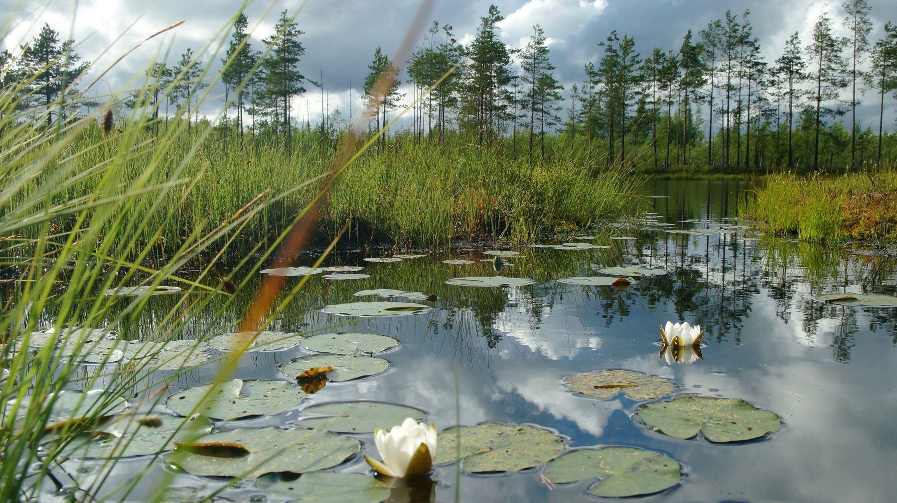 Озера Карельского перешейка 3 Лето озеро вечер сосны