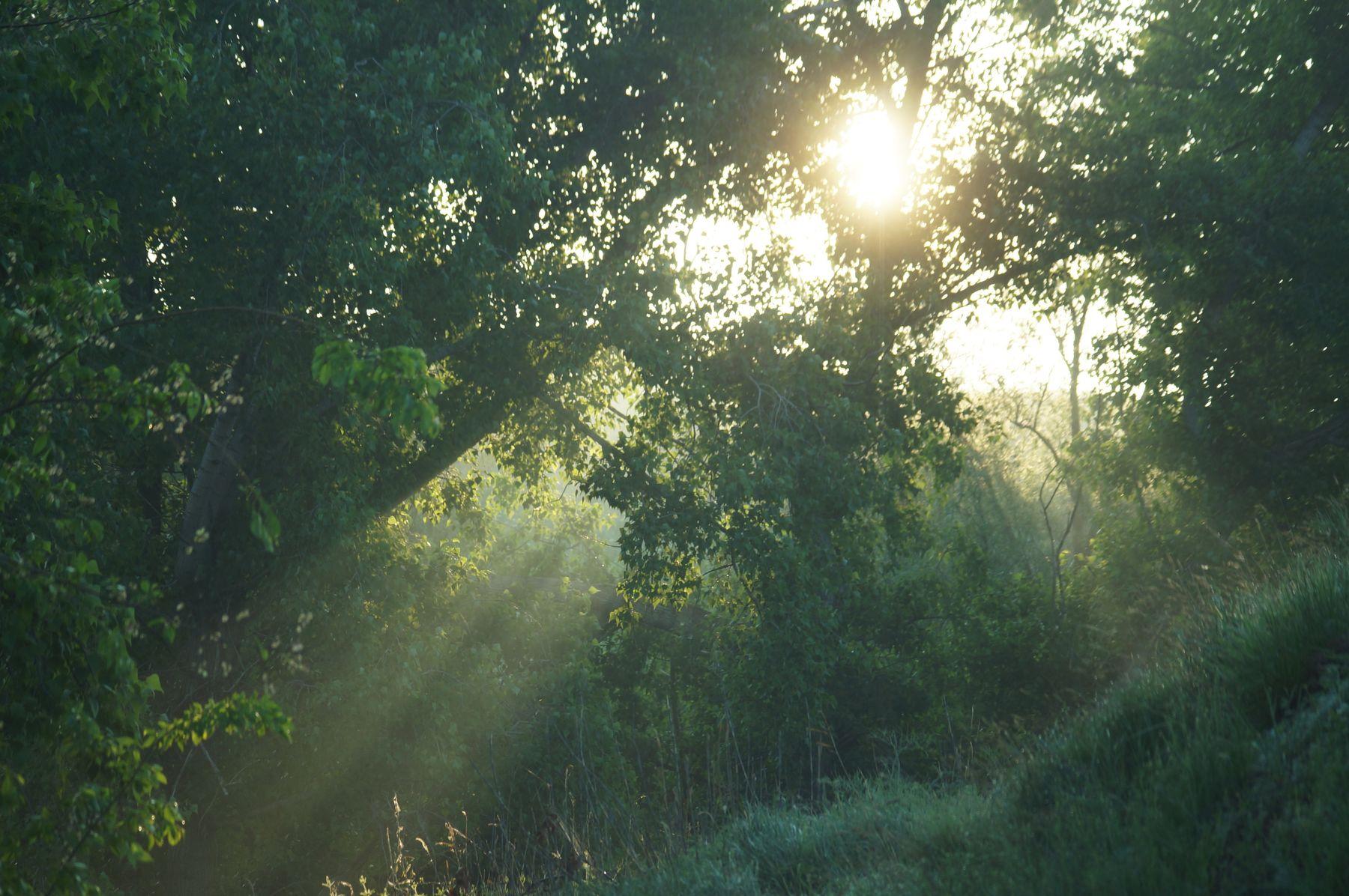 Утренний свет Волгоград солнечные лучи утро весна