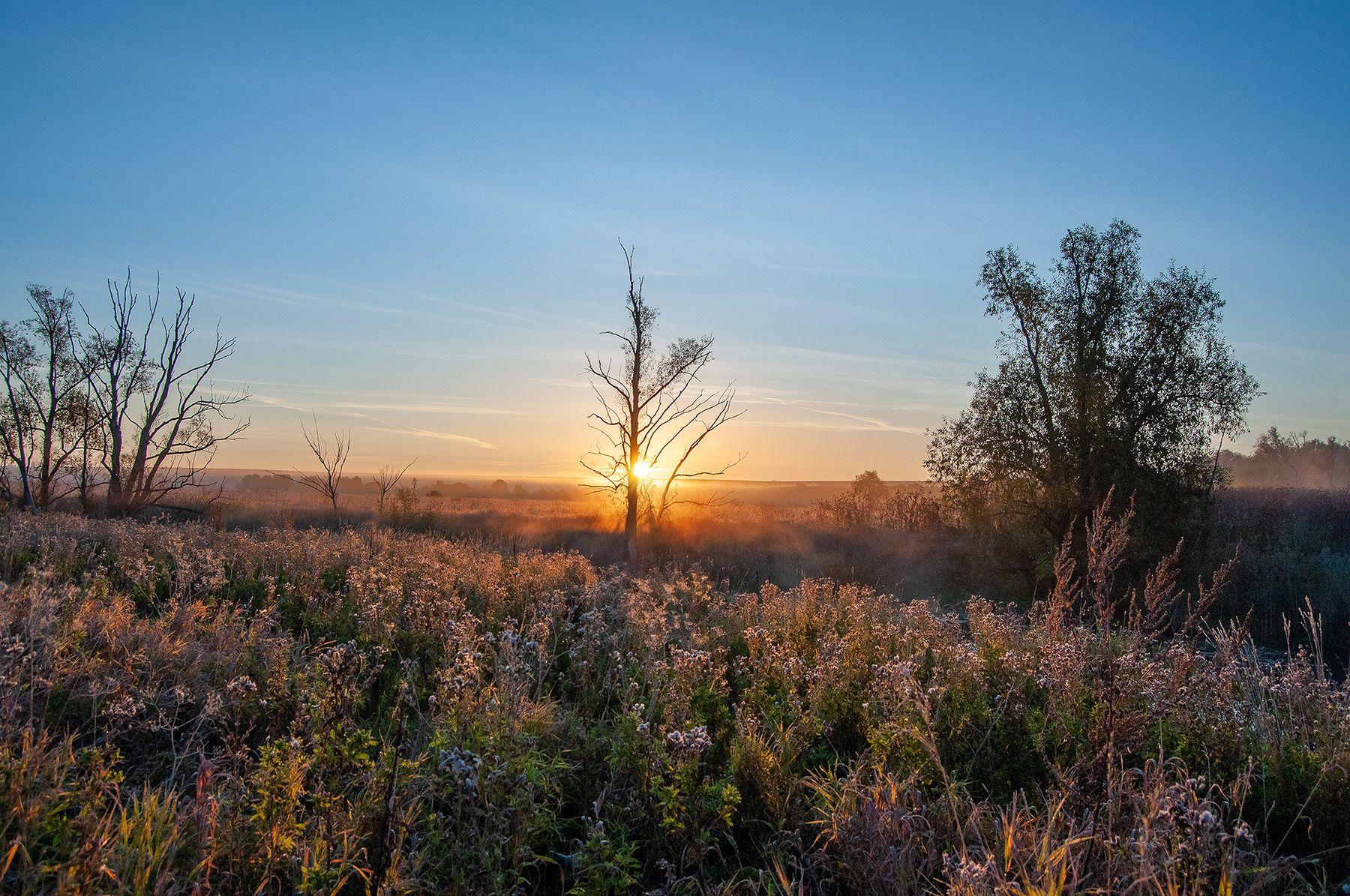 *** утро рассвет поле река дерево солнце нижний новгород саранск