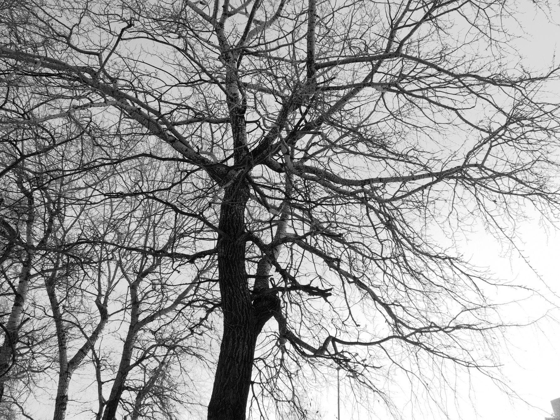 Кружева дерево ветви графика кружева Шварц