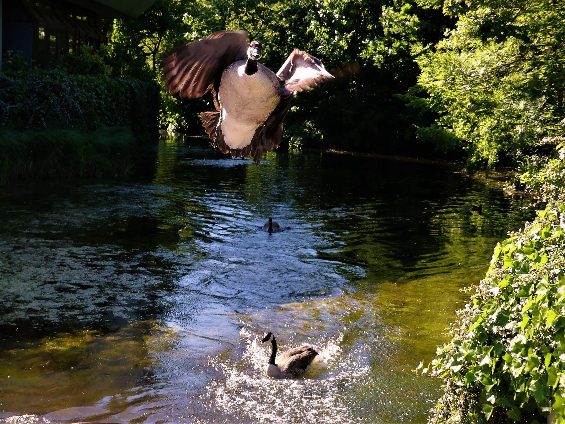 Третий лишний Водоём летящая утка