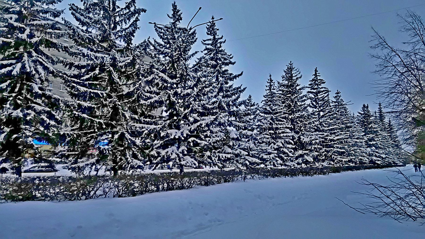 ...и ель под снегом зеленеет...