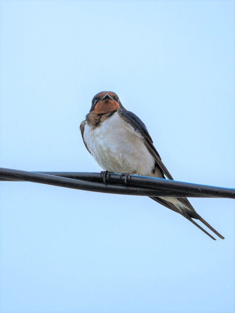 *** Птицы природа