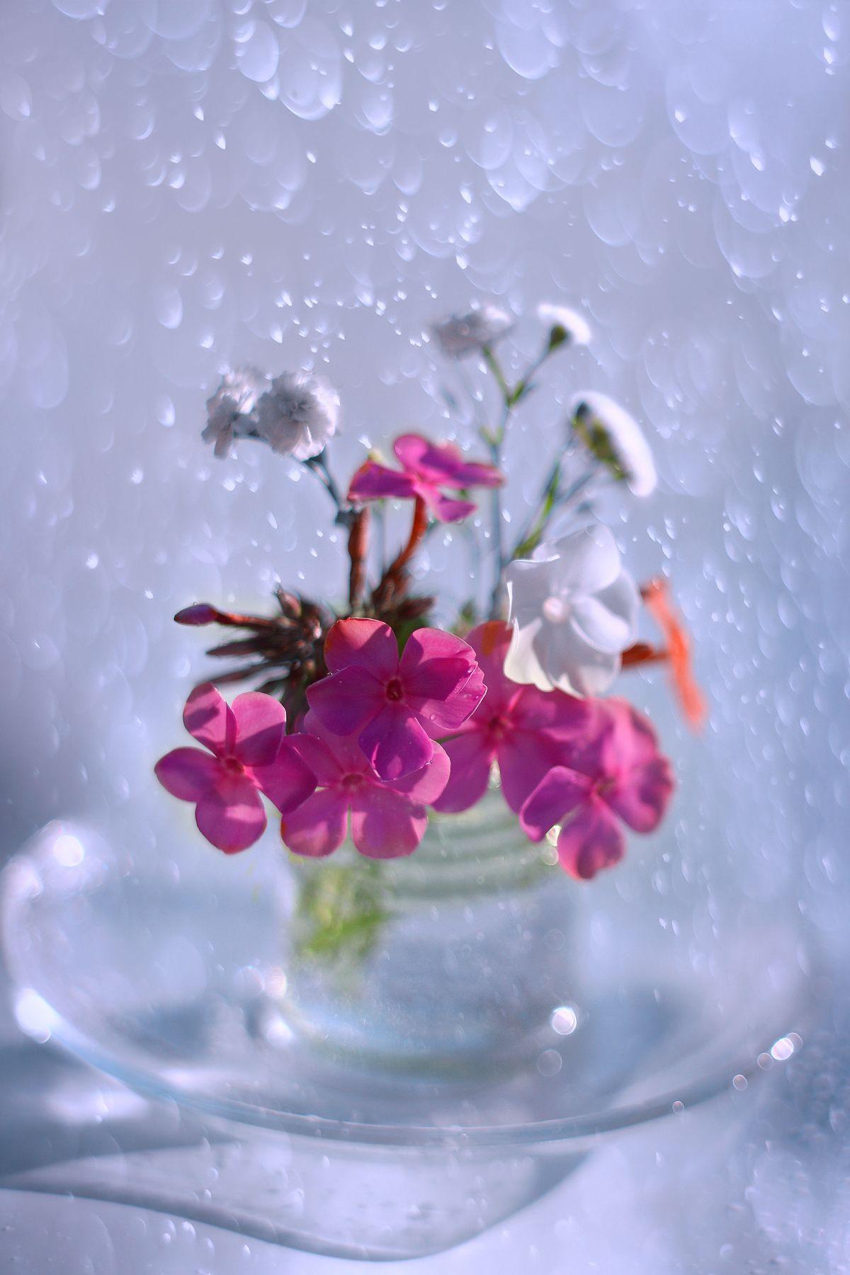 Летний букетик природа лето цветы июль натюрморт
