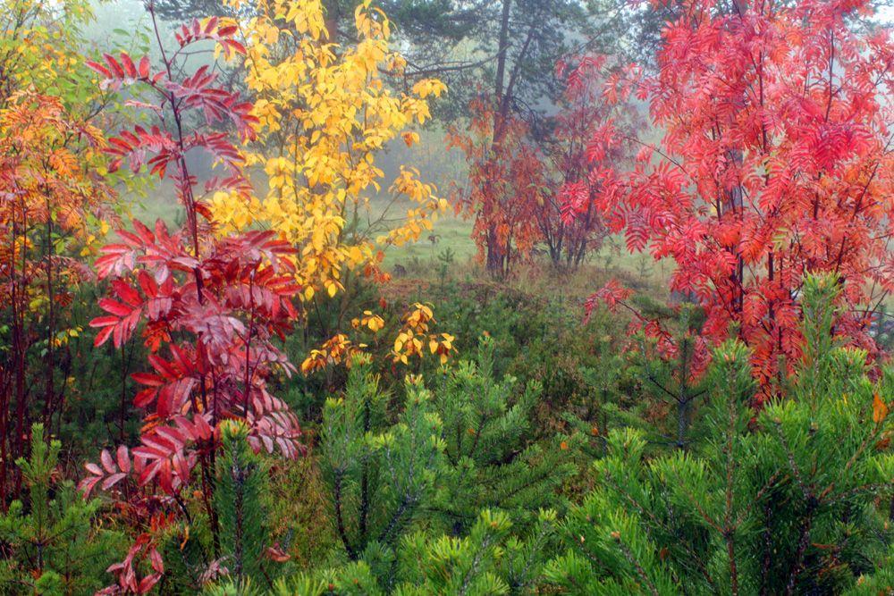 Осенний этюд Туман осень деревья листья