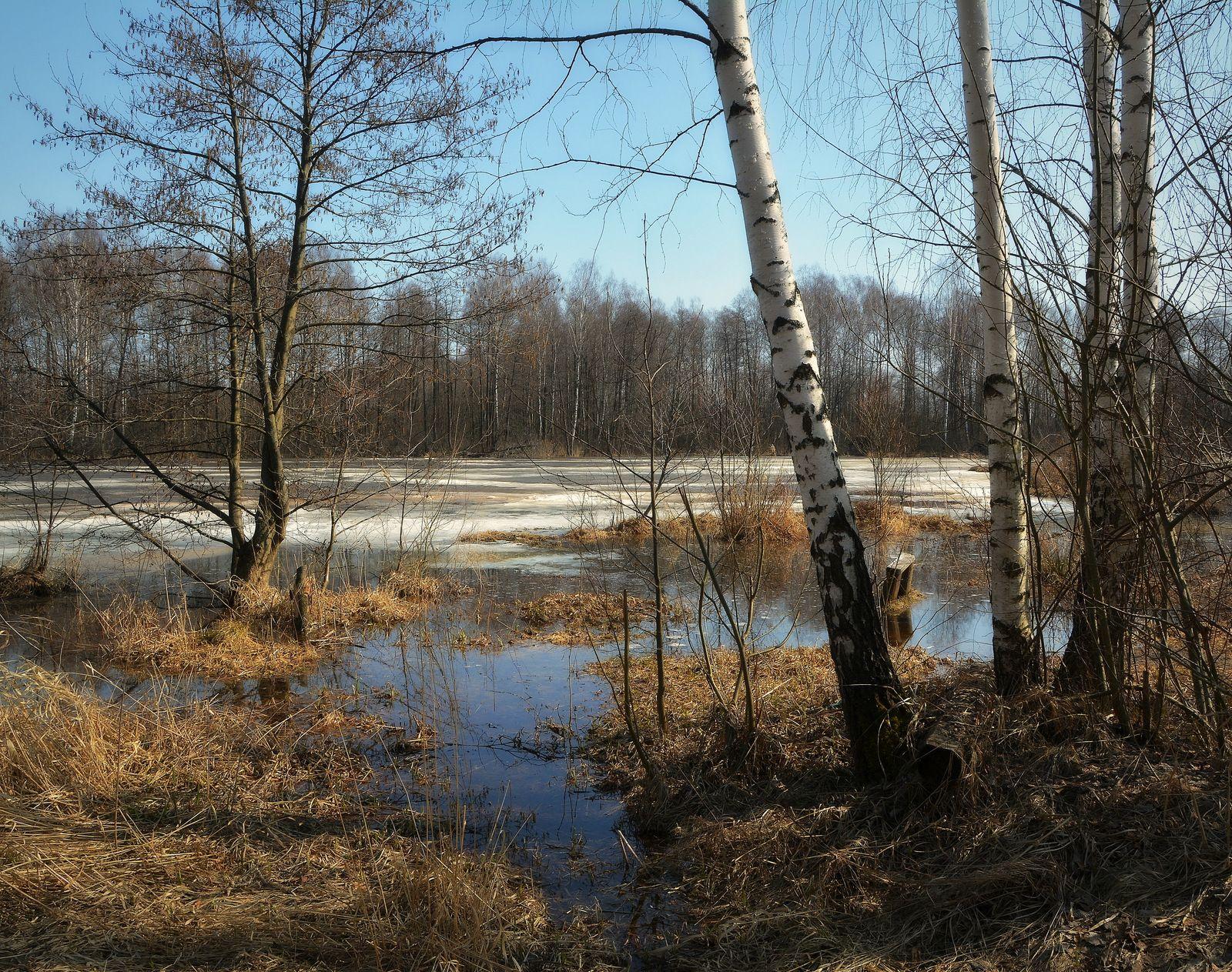 Посидели, отдохнули... Сергей Алексеев пейзаж