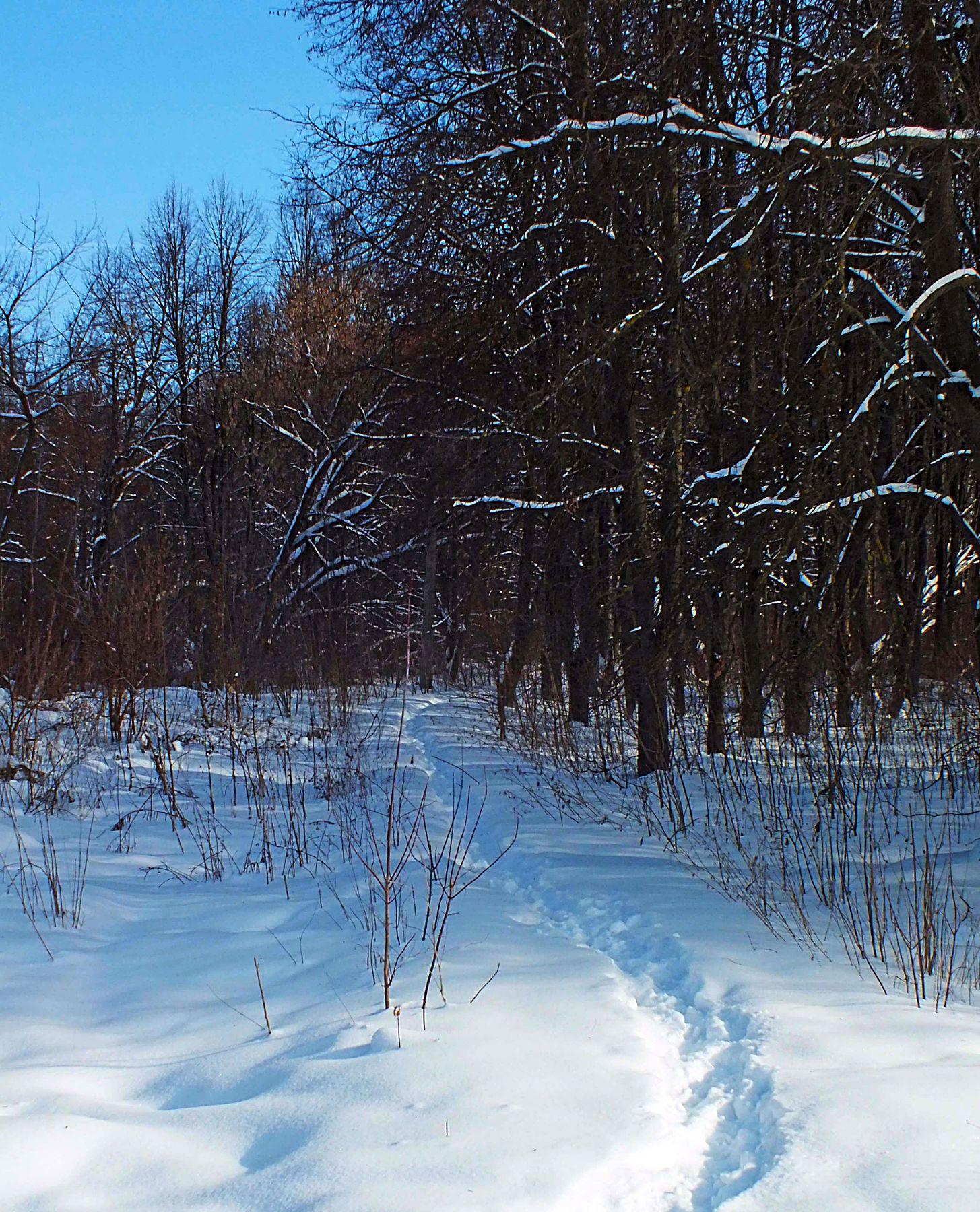 Протоптали зима снег мороз