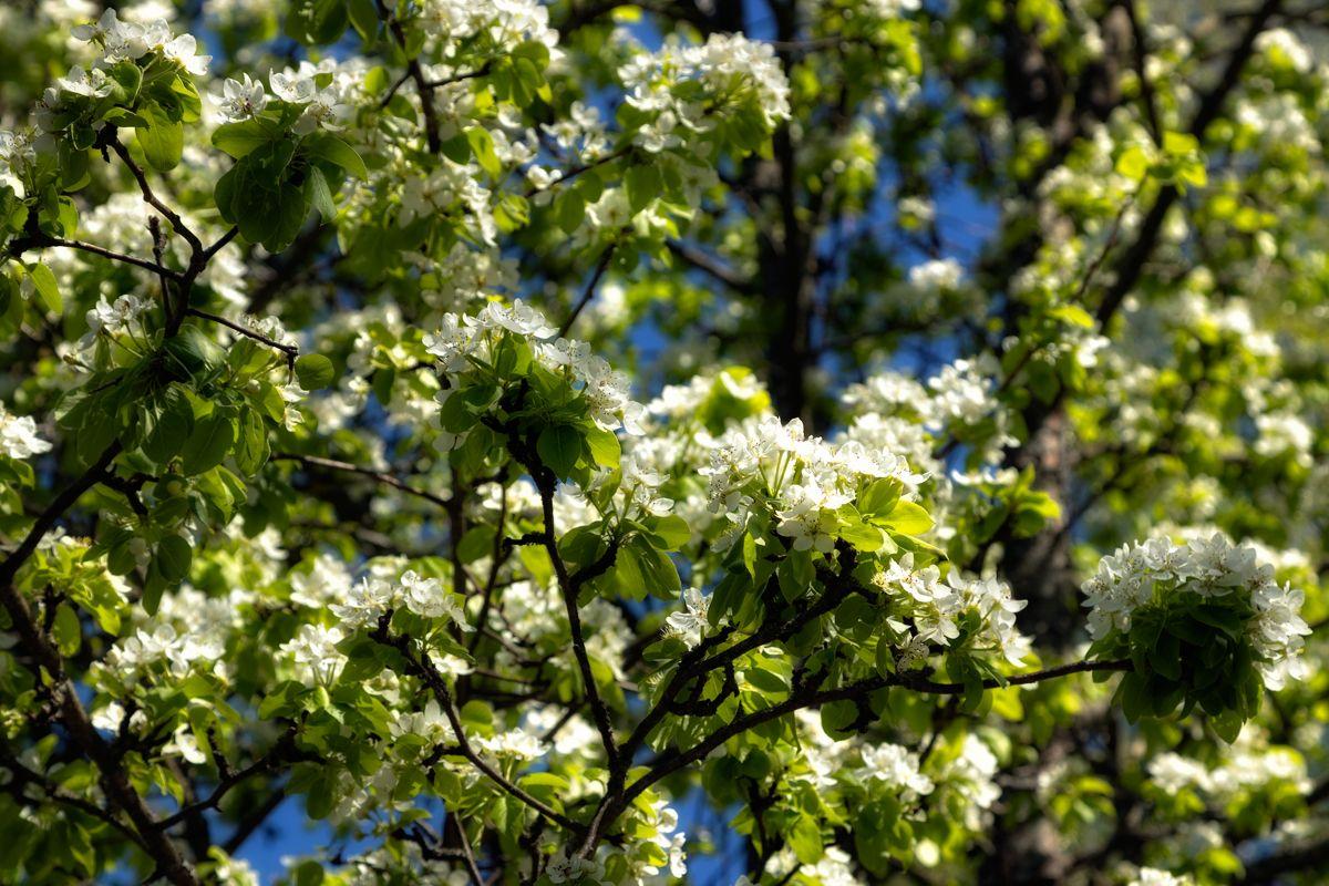 Пора цветения...или...смакую весну...