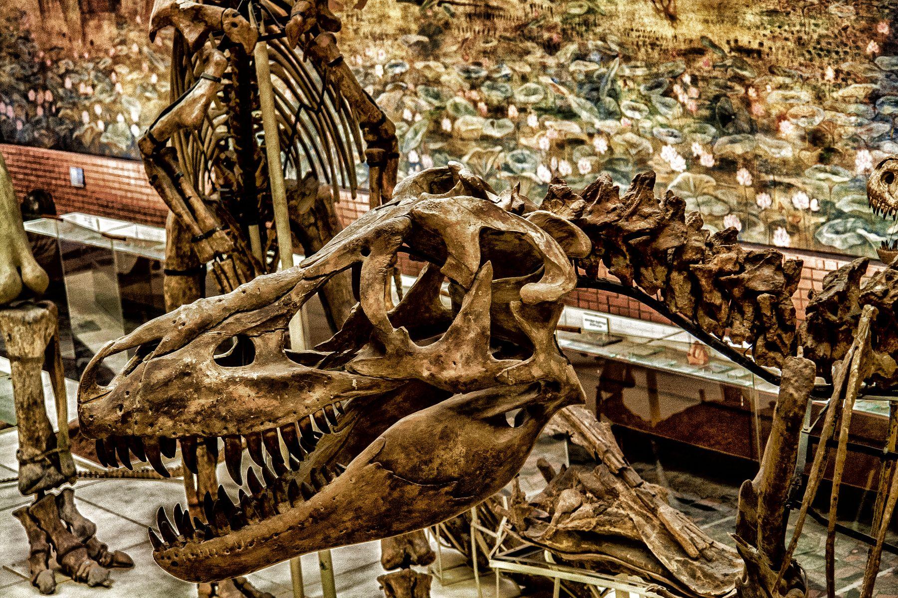 Тираннозавр Музей палеонтология Коньково Москва