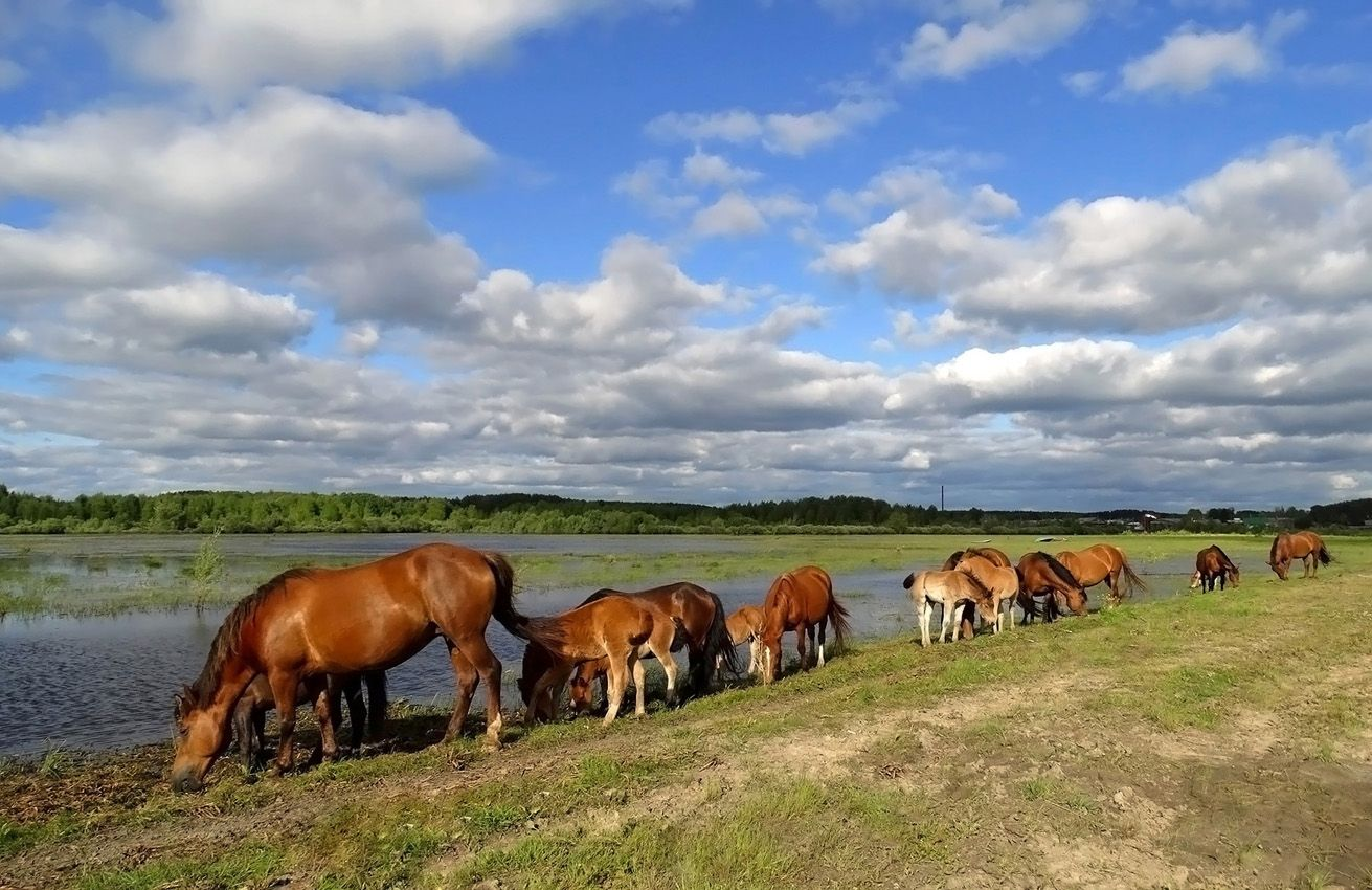 Табун Домашние животные Лошади табун лето