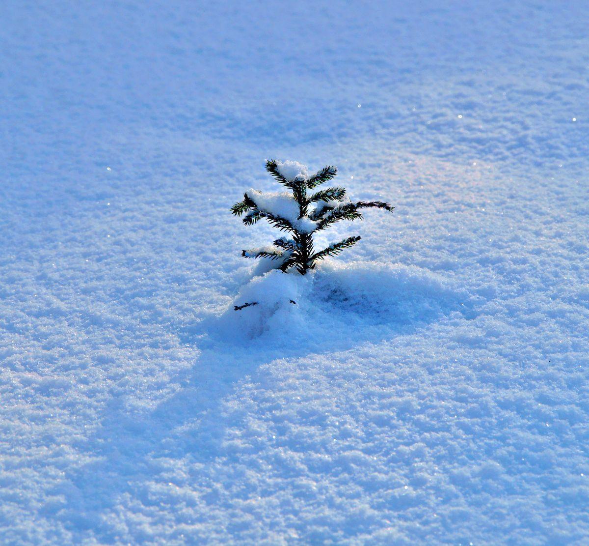 """Мороз снежком укутывал..."""