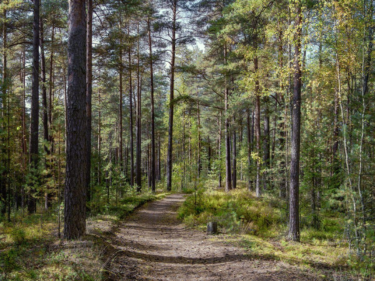 ***Осень в лесу.
