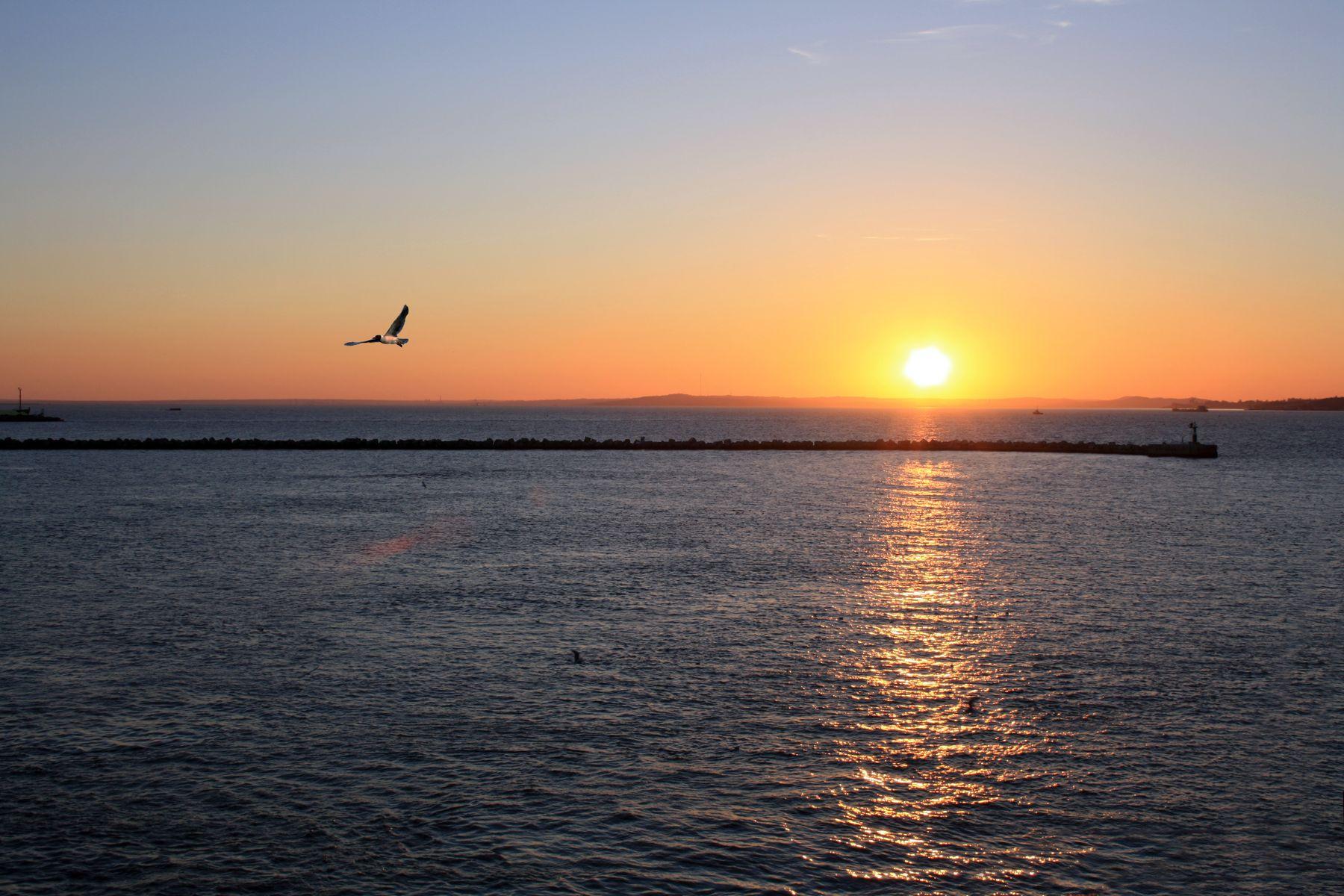 Черноморский закат закат Крым Черное море чайка пейзаж лето