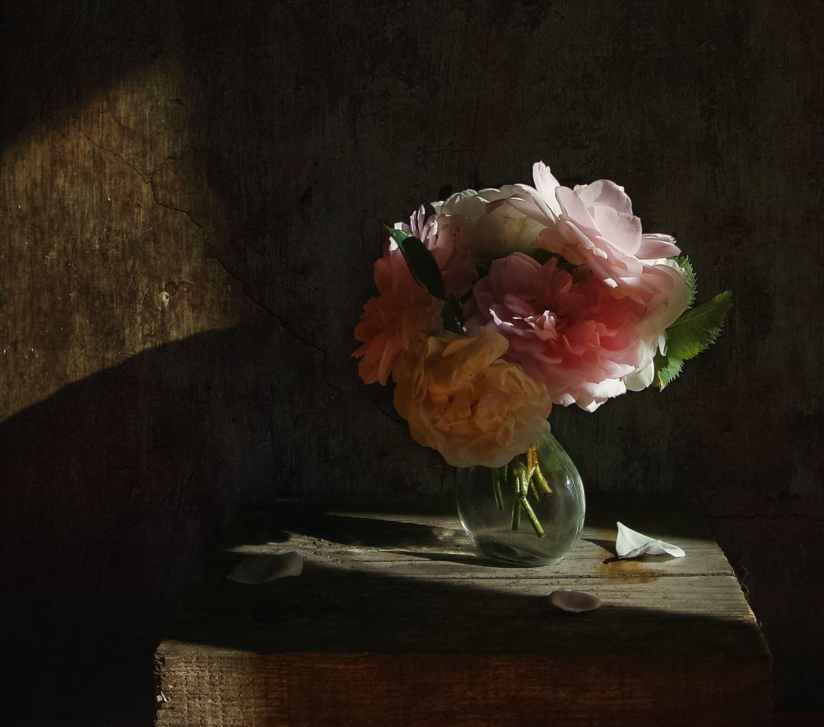 Розы, освещенные солнцем