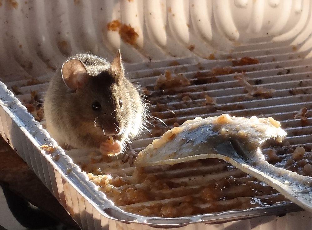 Обжираловка Мыши