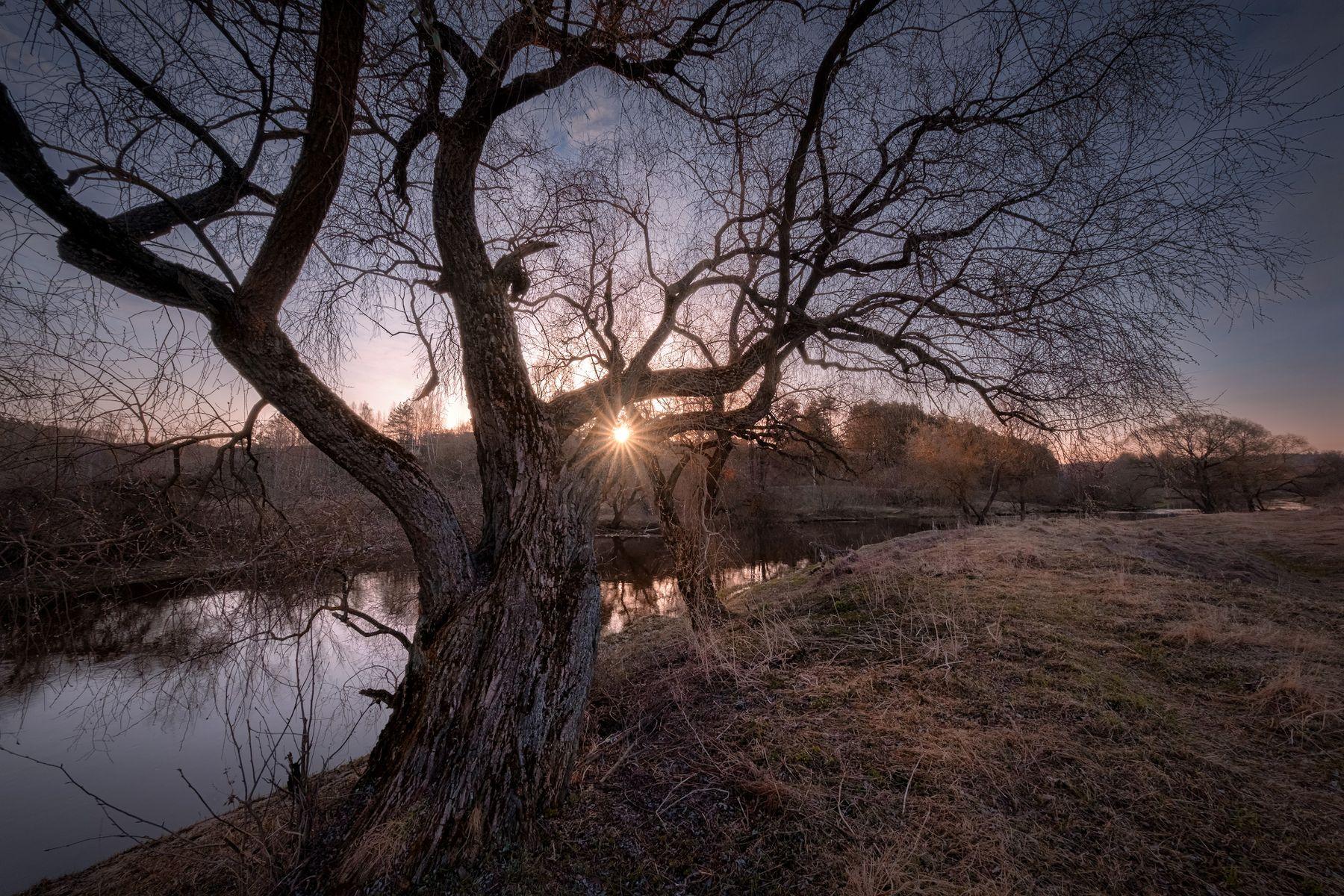 Весна старого великана река истра утро дерево рассвет вода пейзаж