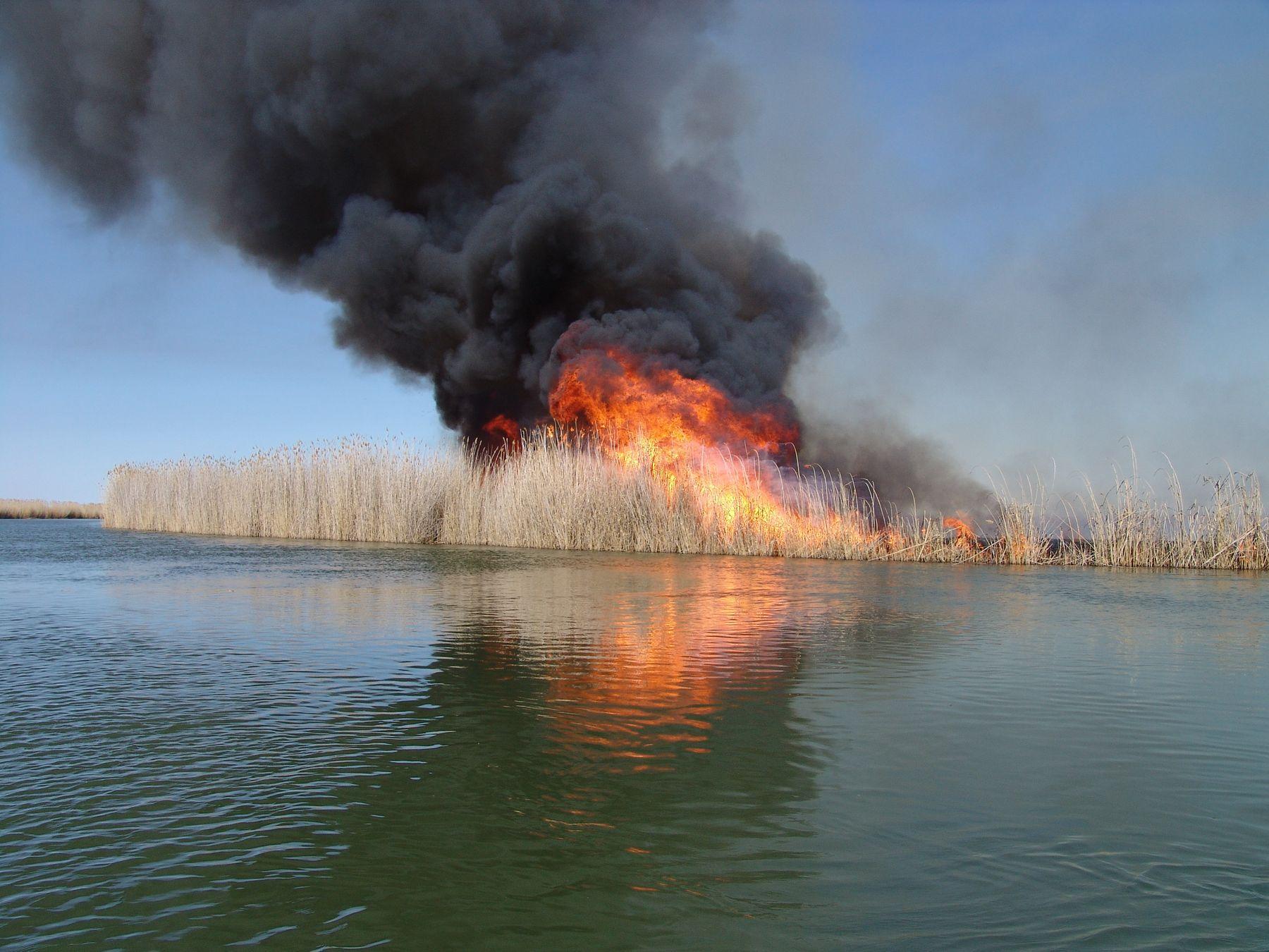 пожар в плавнях