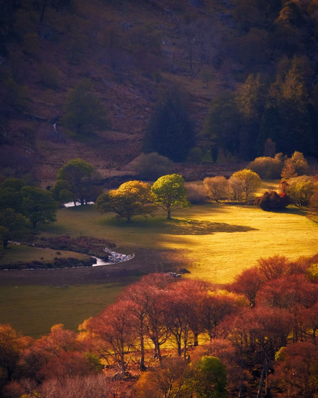 ...sunny meadows... ireland nature outdoors landscape countryside meadows fields river bend from above sun evening dusk sunset trees slopes hills wicklow moountains luggala guiness lake europe picturesque awe spectacular shades shadows tones titnts