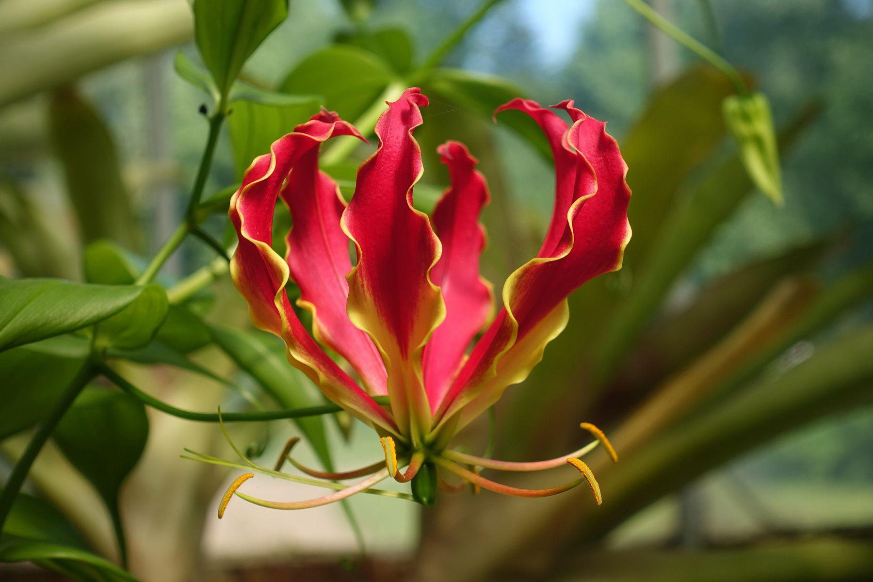 Цветок Ботанический сад Петра Великого природа цветок