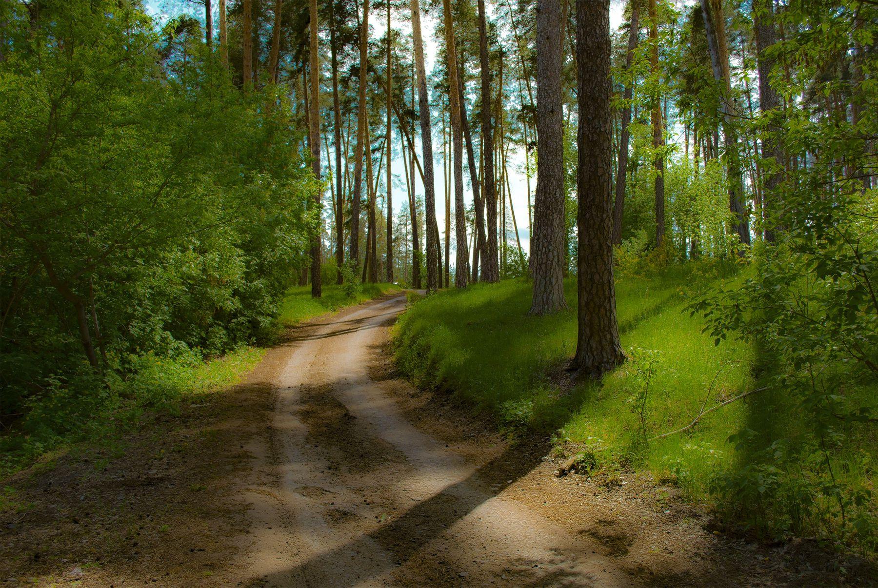 Тихий лес TangodeZorros фантазия Лес