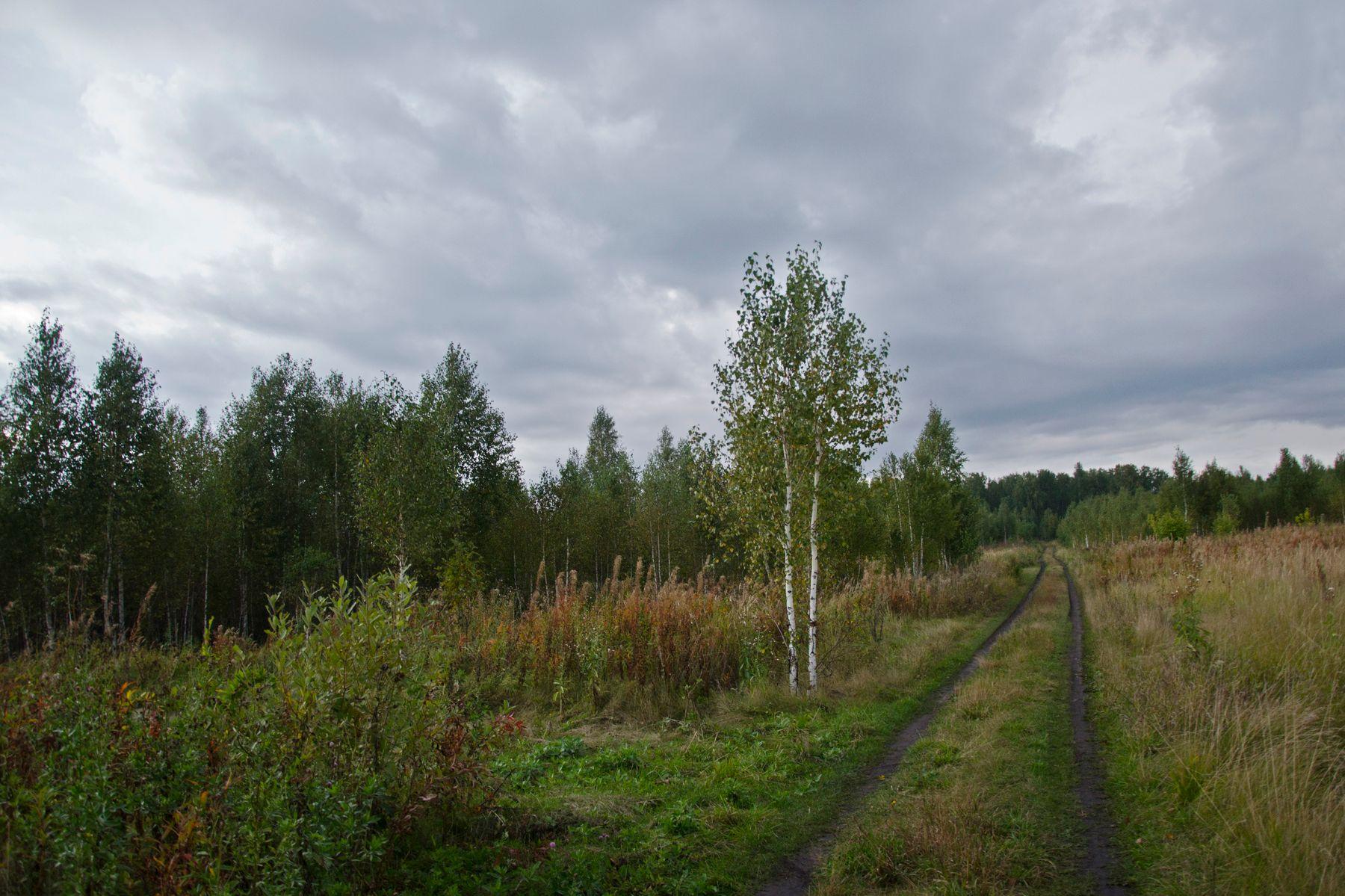 ***** Березки осень дорожка облака