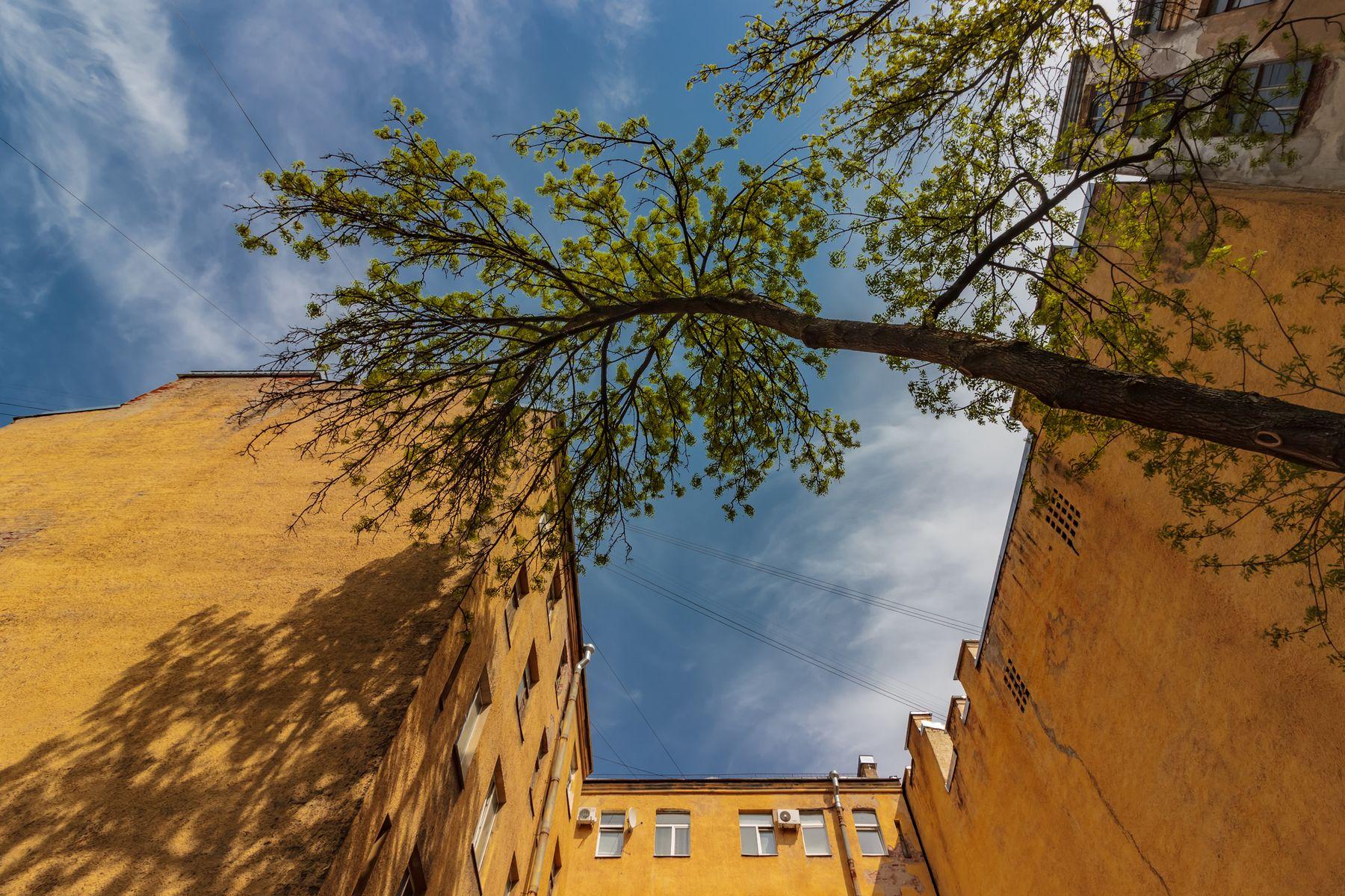 Жажда солнечного света и идеальной геометрии пространства Санкт-Петербург день стены дерево небо 10 миллиметров