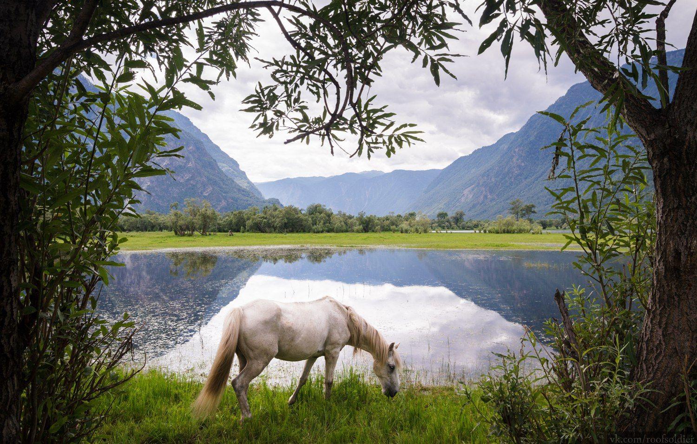 Алтай Алтай пейзаж Россия природа скала горы лошадь животное озеро отражение лес