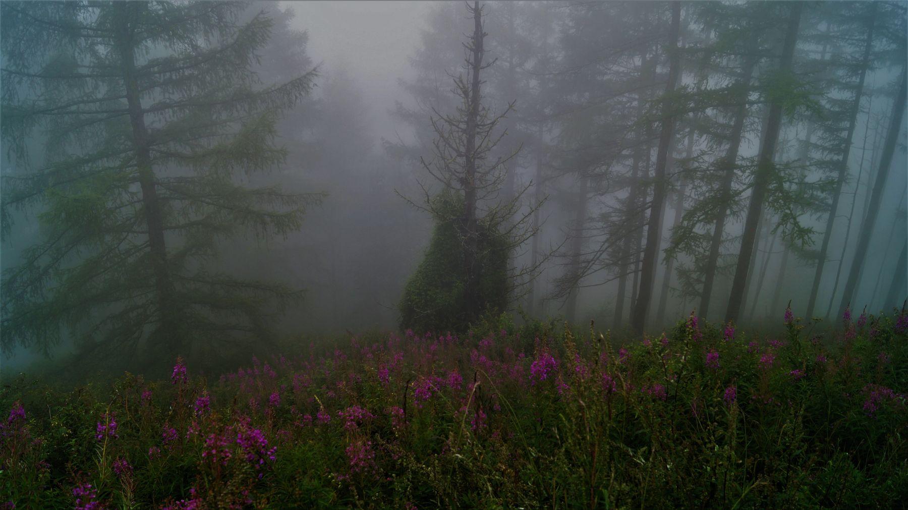 Туман Туманыч