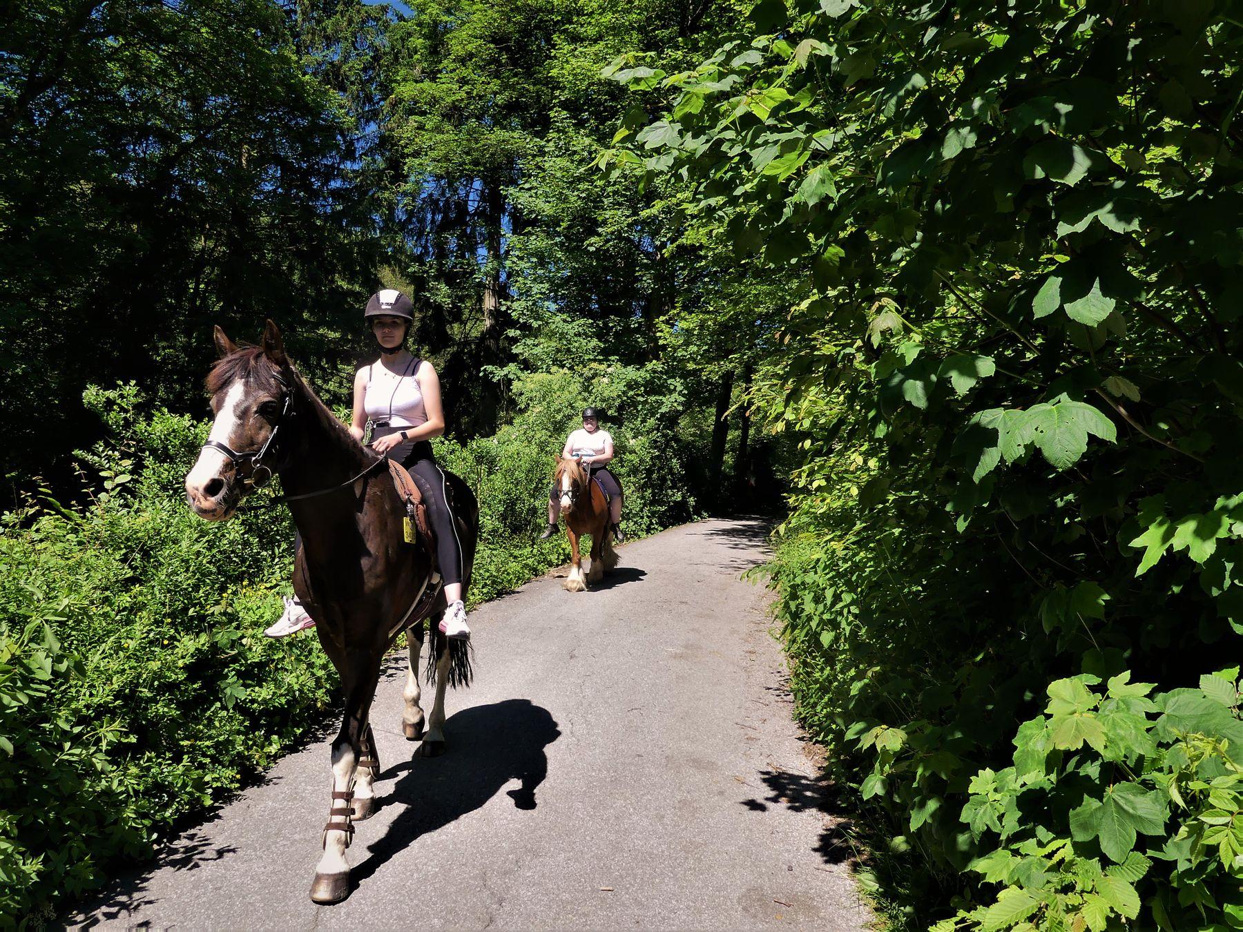 Размер имеет значение Природа лошади наездницы