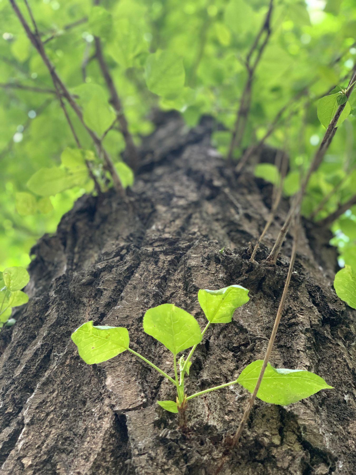 Дерево, вид снизу.