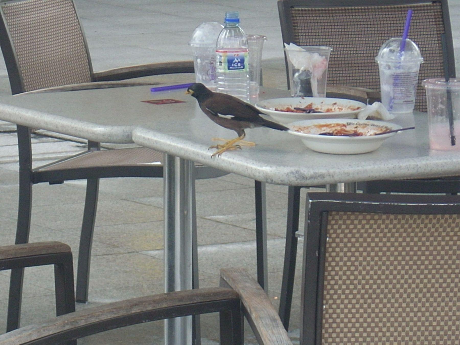 *** птицы