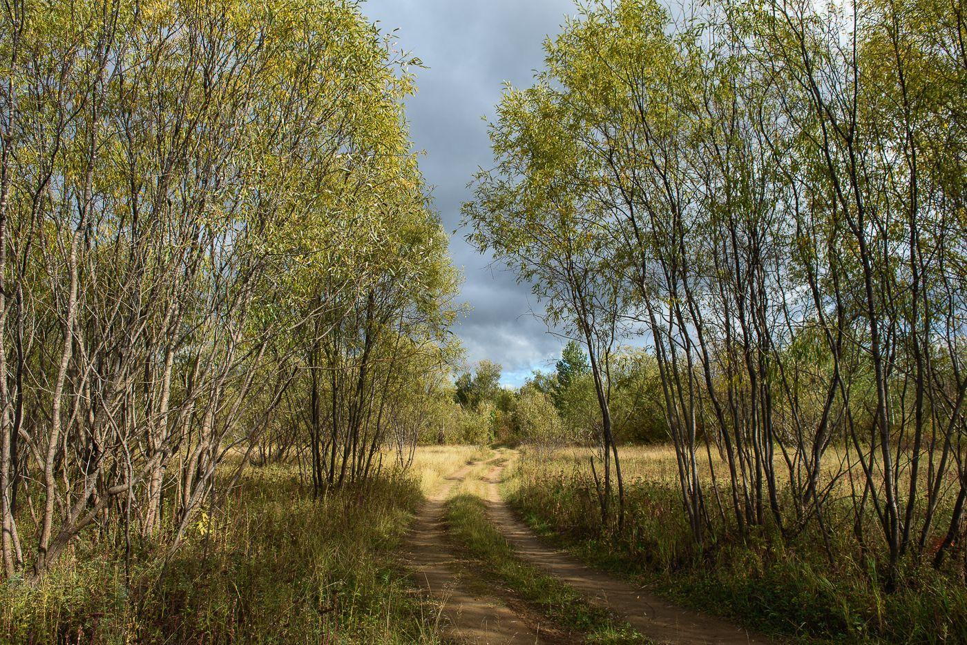 *** осень поле пейзаж проселочная дорога ивняк заросли ива небо сухая трава