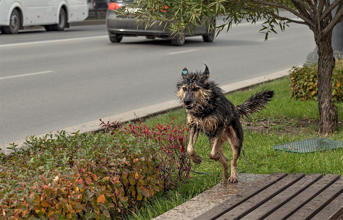 Эх, жизнь собачья...