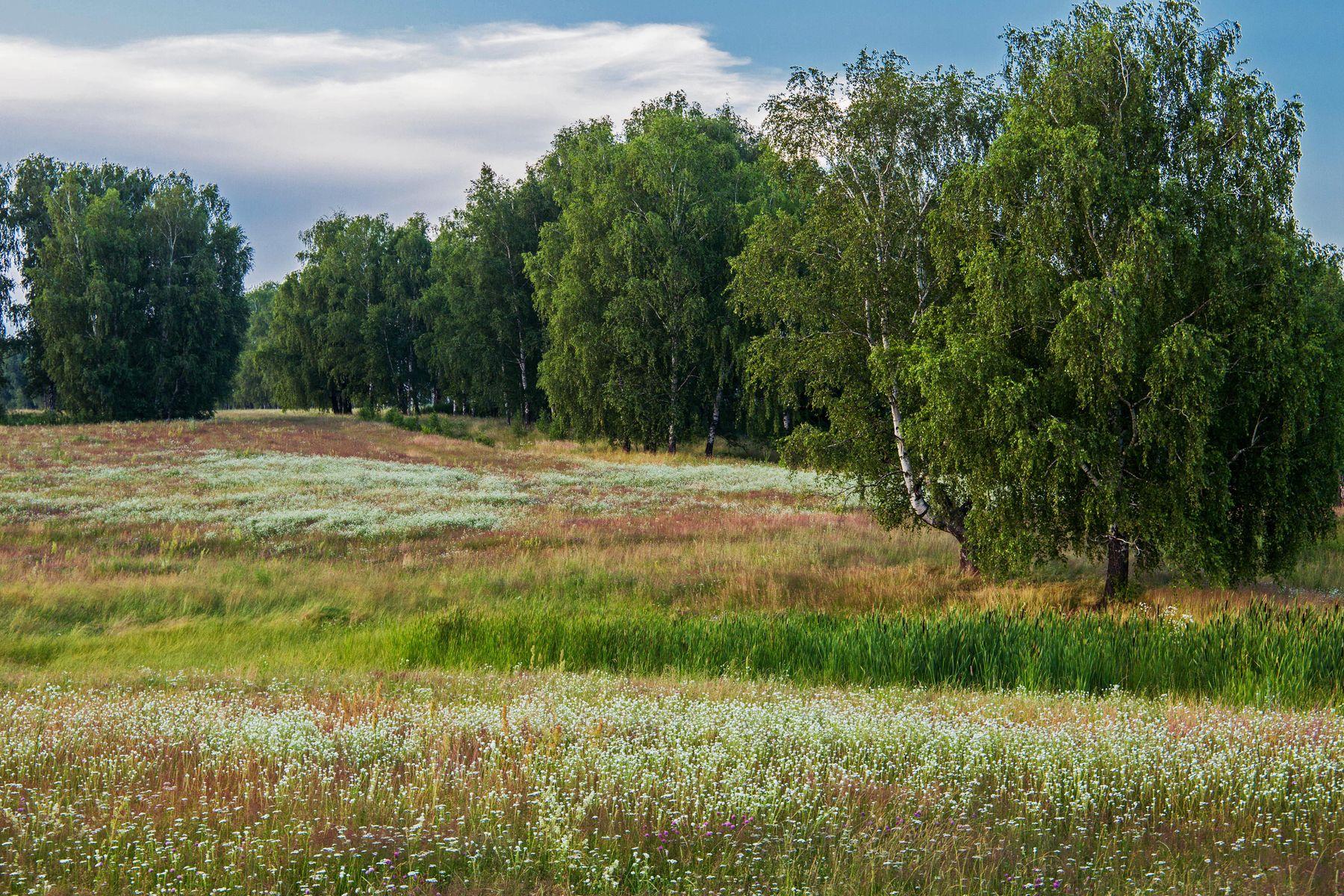 *** природа пейзаж лето вечер луга цветы татарстан новочувашский