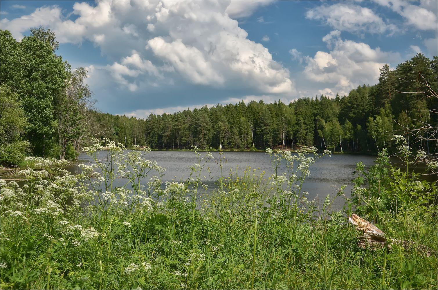 Утопая в зелени пейзаж лес озеро лето