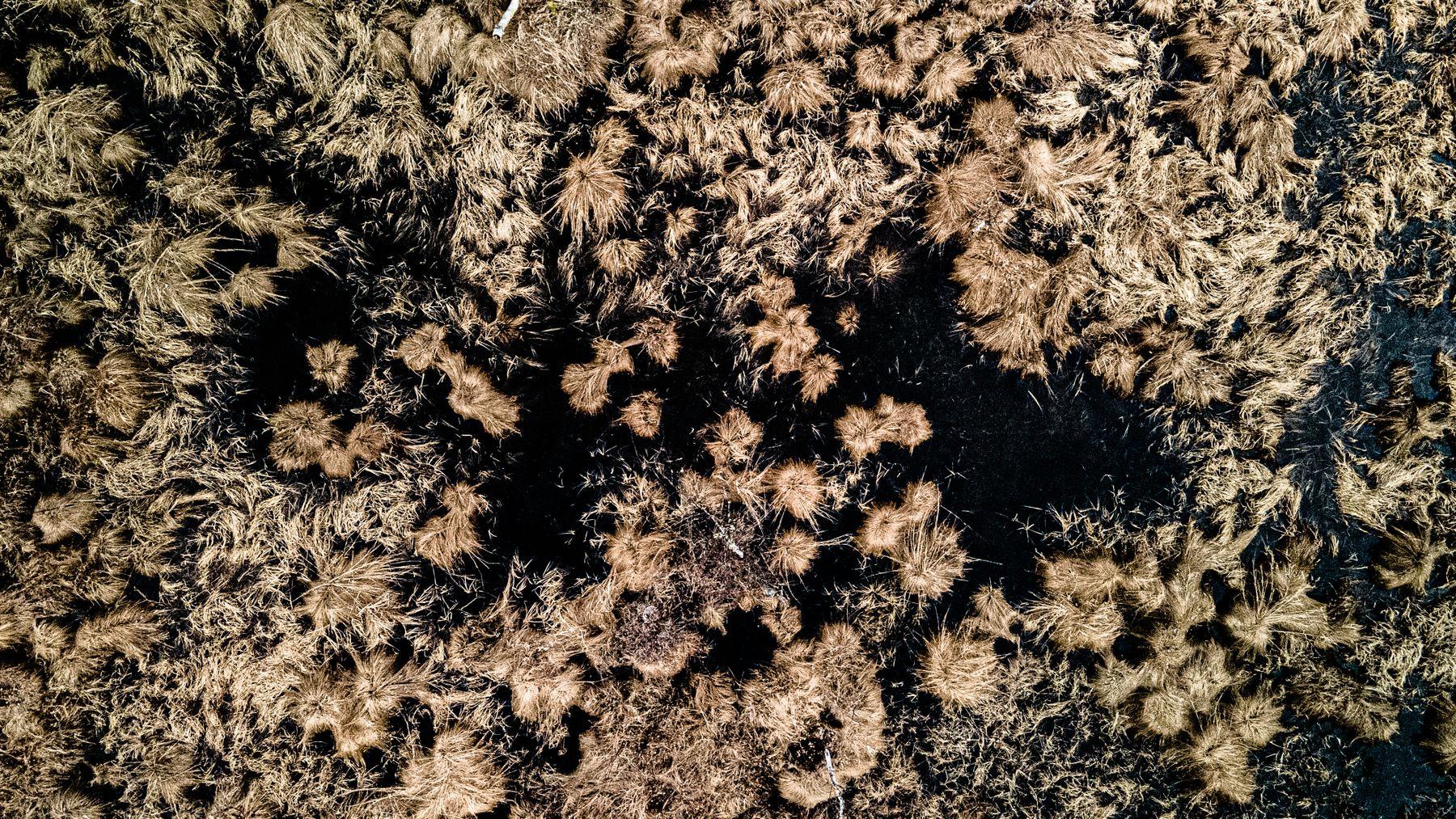 болото в черных тонах