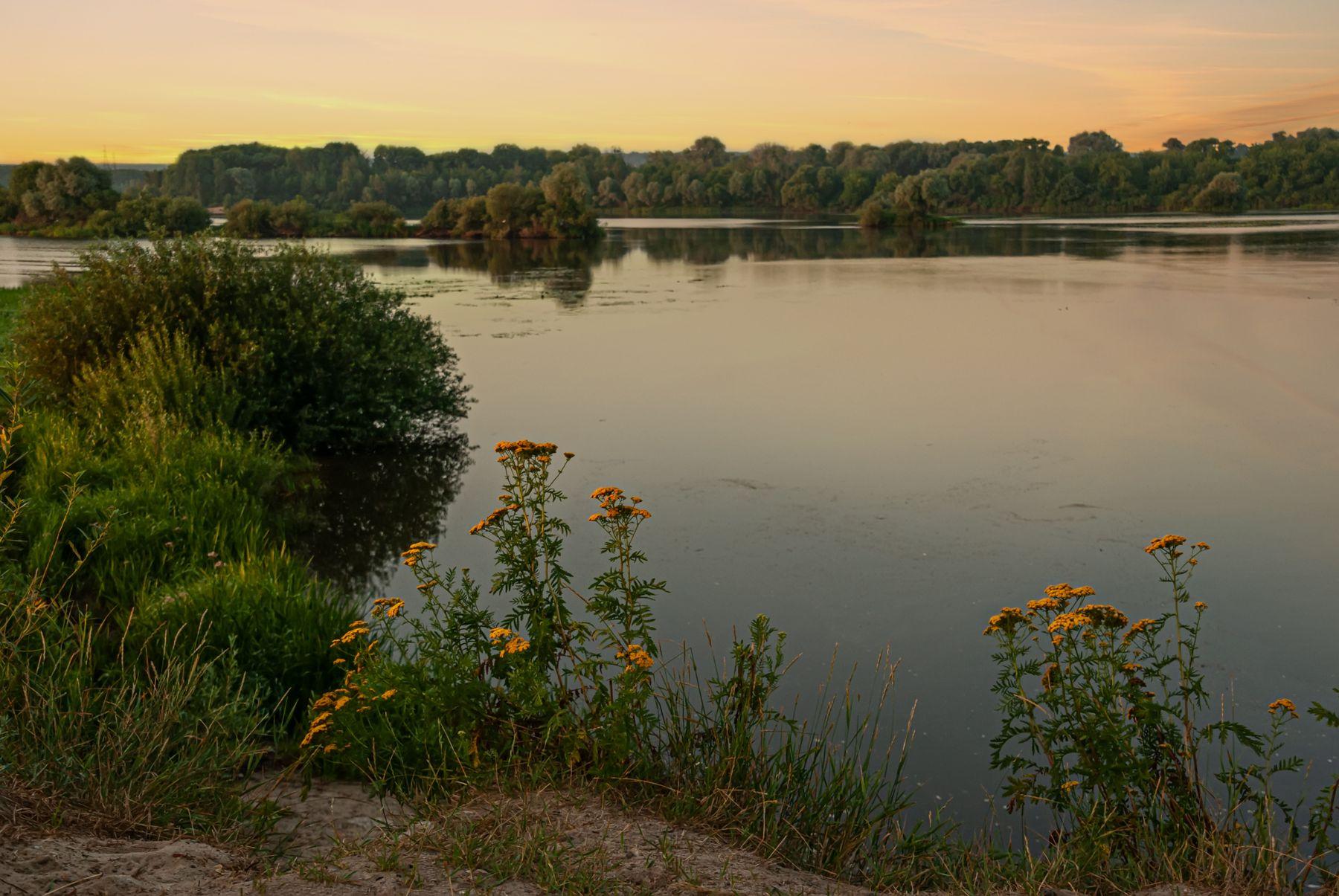 Тишина утро озеро цветы