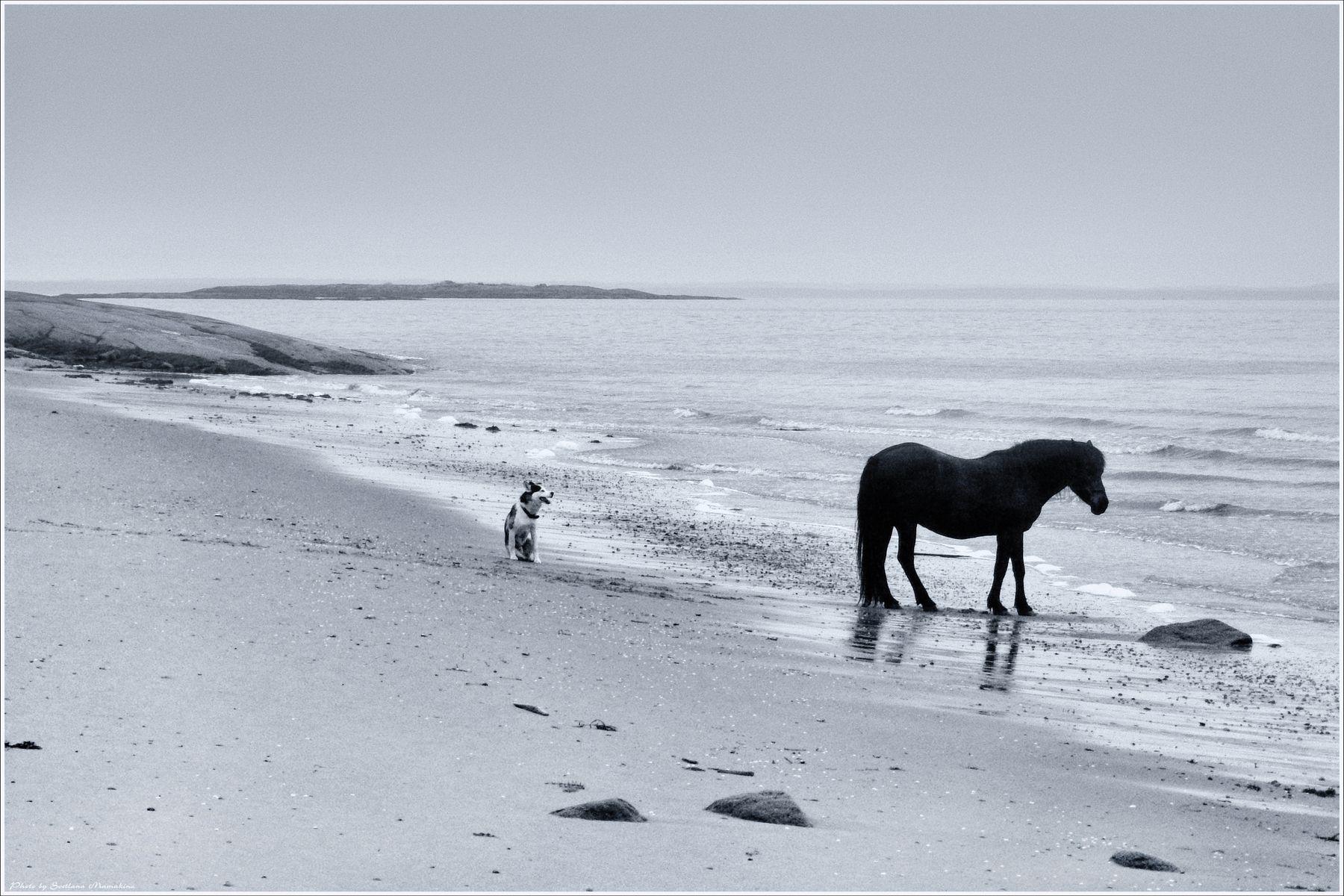 *У самого Белого моря* фотография путешествие Белое море животные лето берег Фото.Сайт Светлана Мамакина Lihgra Adventure