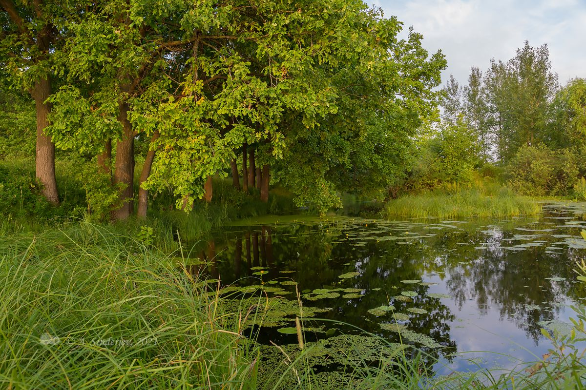 Пейзаж с озером осенний пейзаж озеро деревья дубы