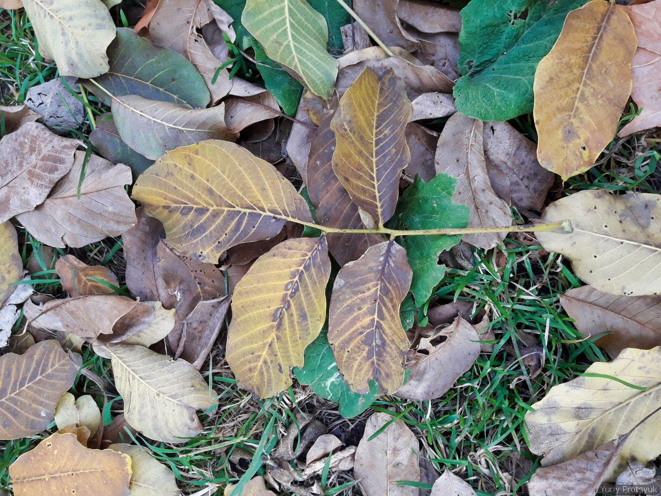 *** осень осінь autumn