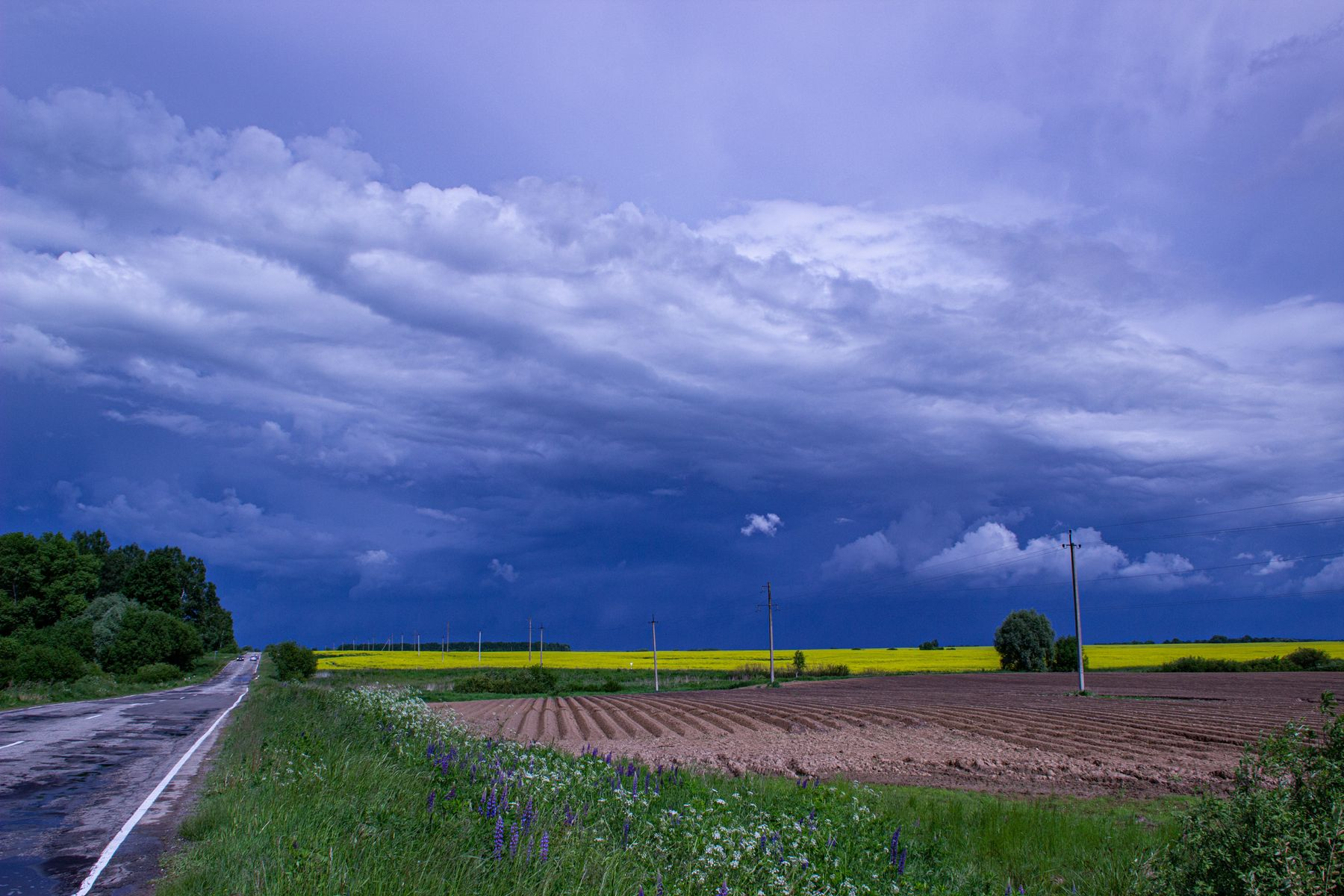 Гроза приближается поле горчица туча гроза дорога