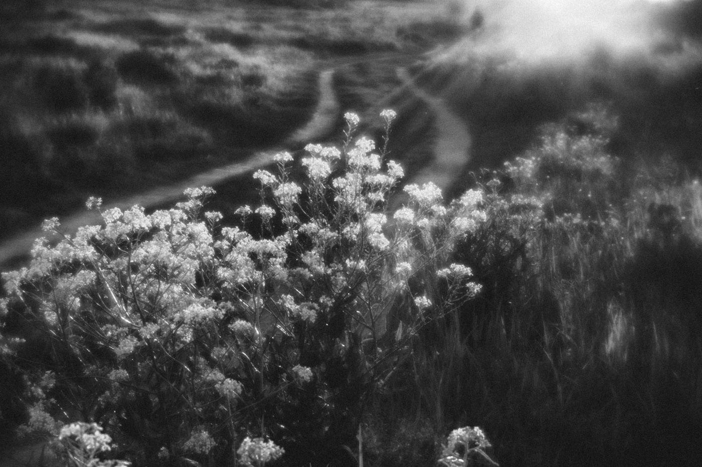 дорога МОНОКЛЬ лучи солнце трава