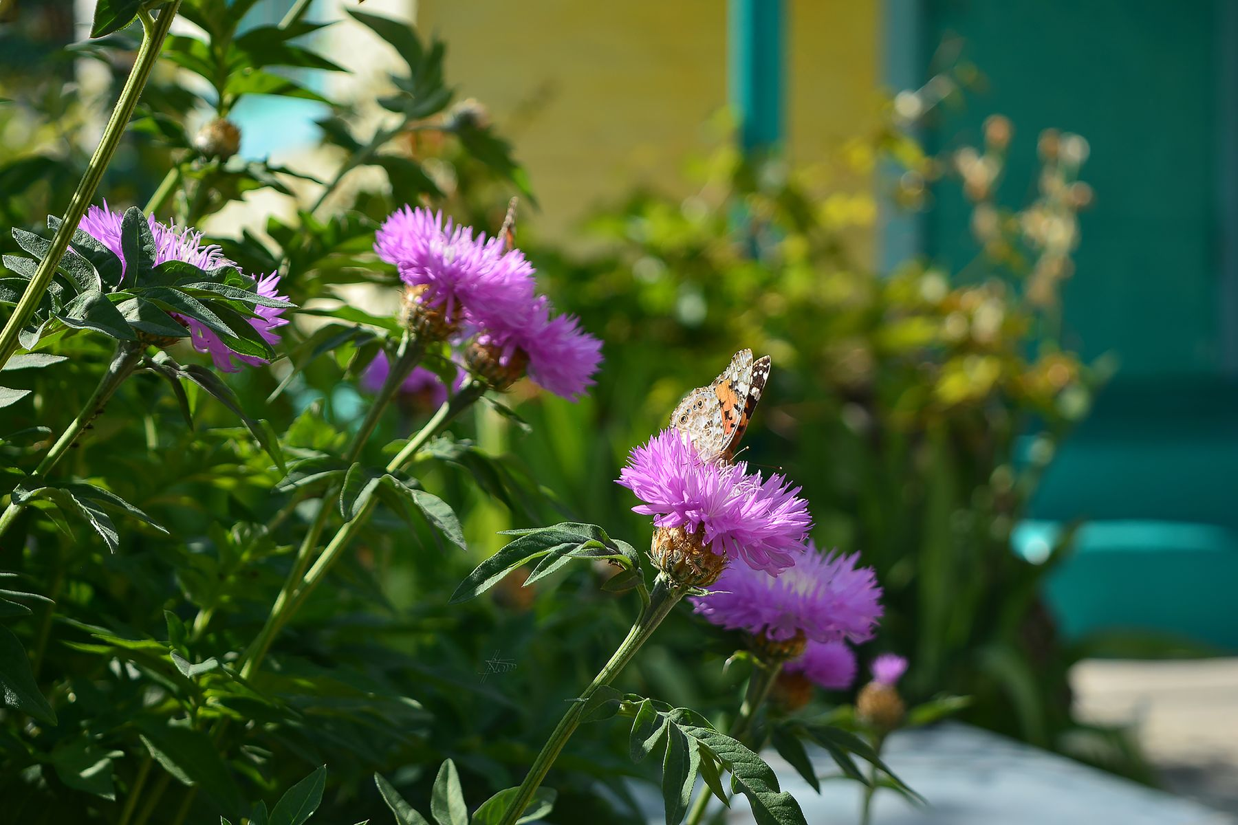Порхающий май природа весна май бабочки