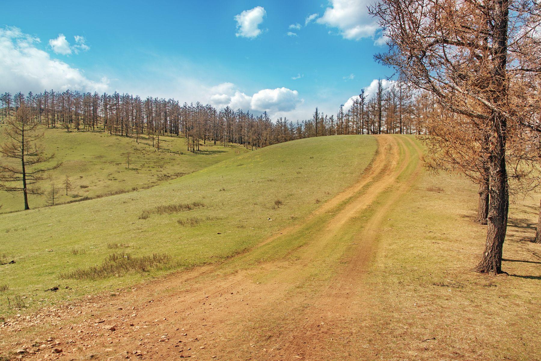 Дорога в сопках трава сопки пейзаж дорога деревья весна