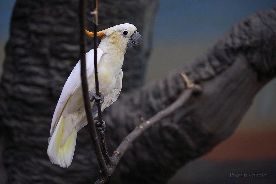 Привет из Шаумбург - Липпе... птица попугай перья дерево клюв когти ветка