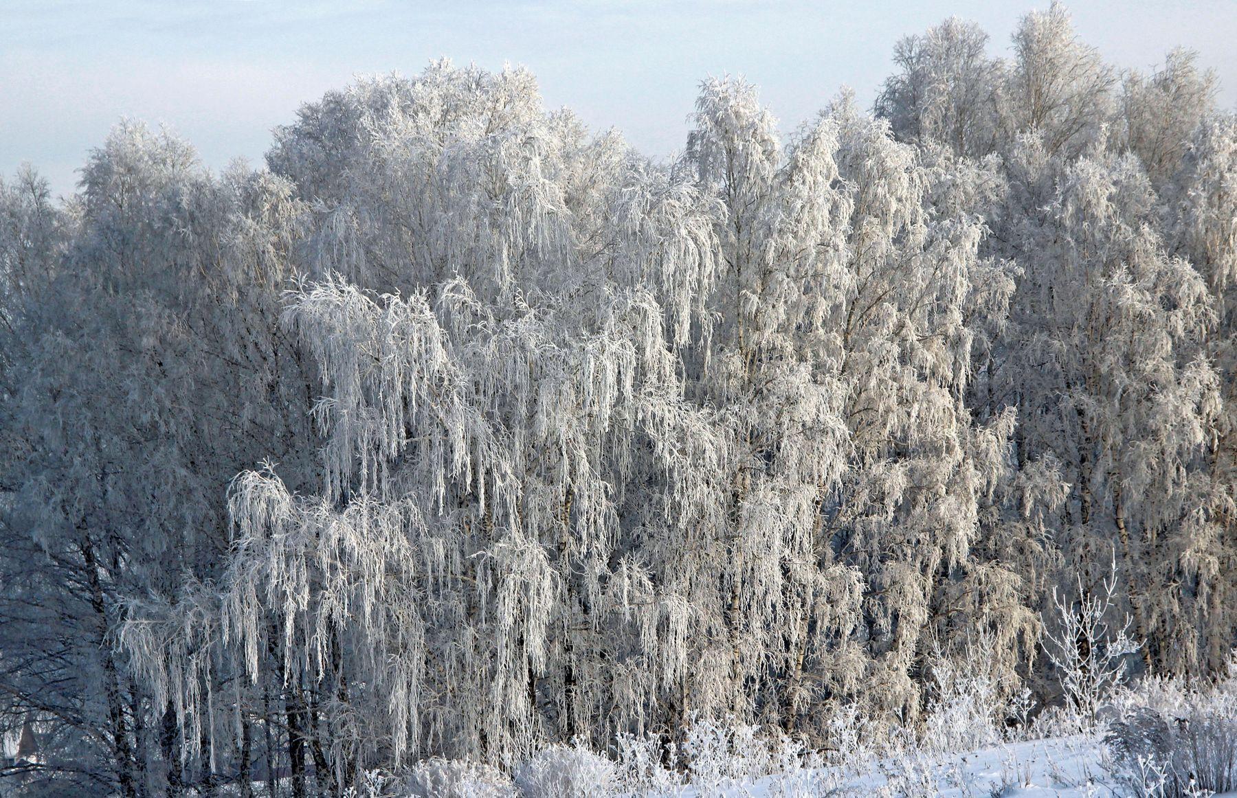 Зимняя роскошь зима лес Россия Сибирь снег иней