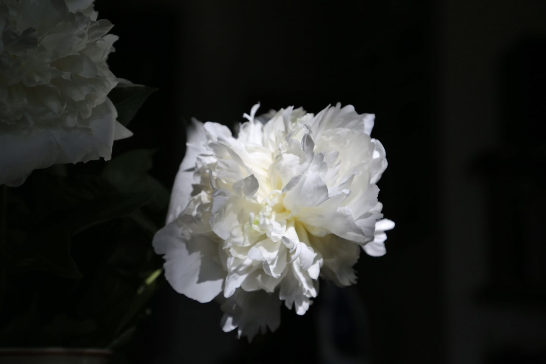 Императорский цветок