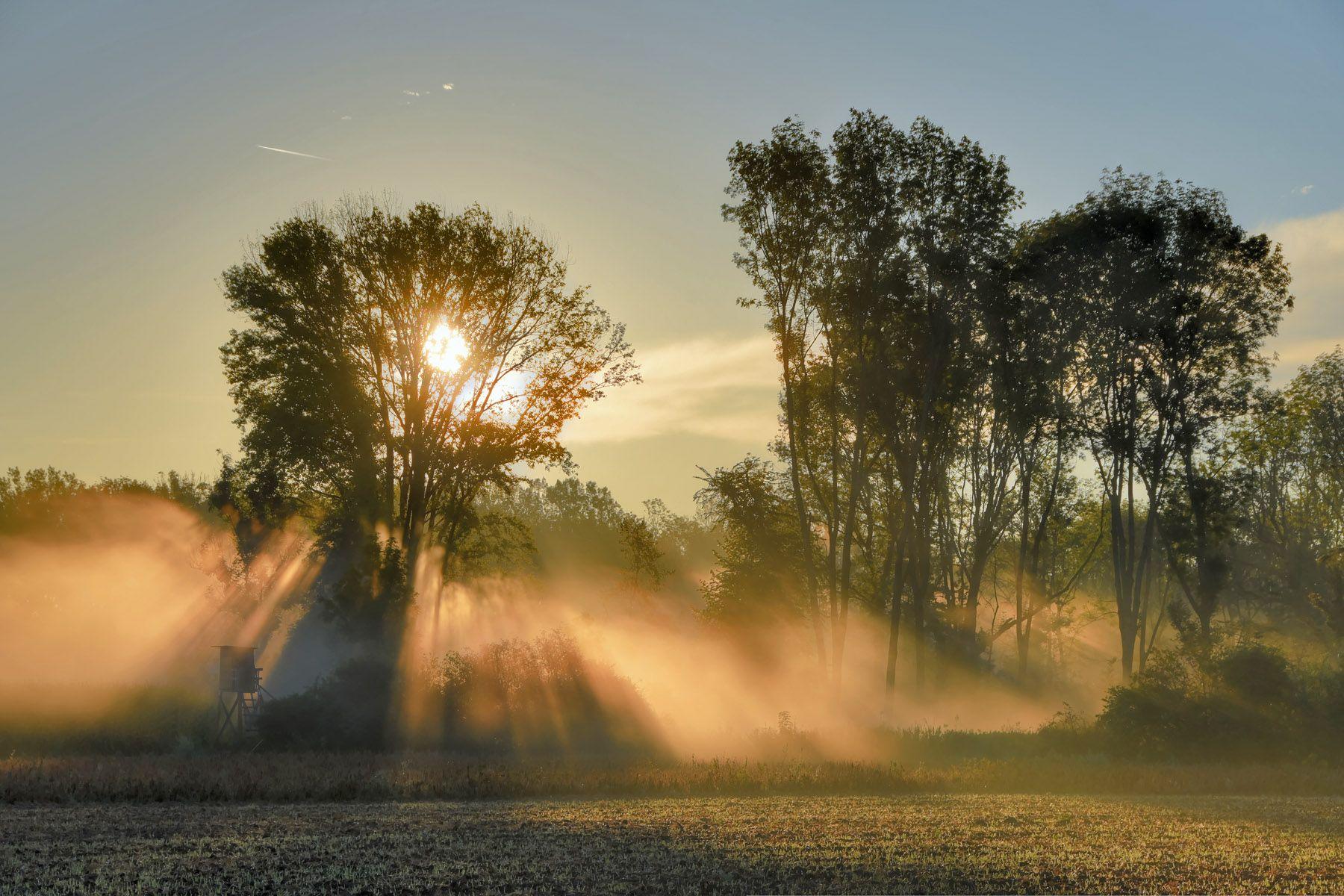 ъъ утро небо лес свет туман